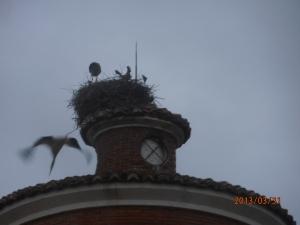 Familia de cigüeñas que ha anidado en el tejado del depósito